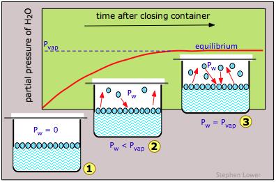 Image that depicts equilibrium vapor pressure.
